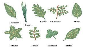 las hojas de una planta