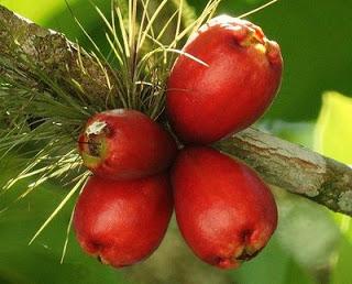 los frutos de una planta
